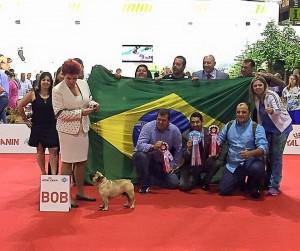 loco BOB met vlag